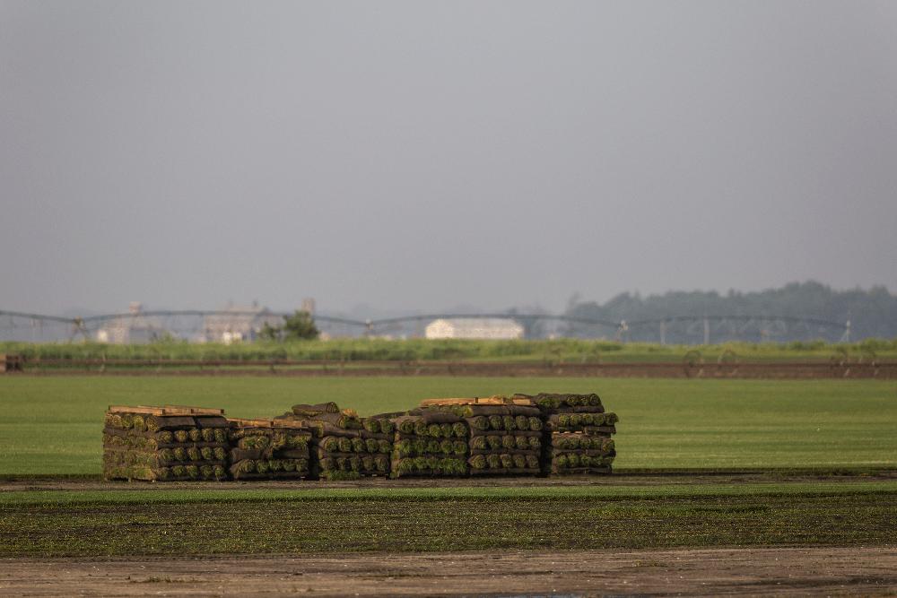 U.S. Congress Funds $3M in Turfgrass Research