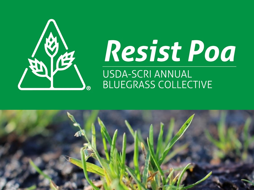 Annual Bluegrass Research Sites Needed