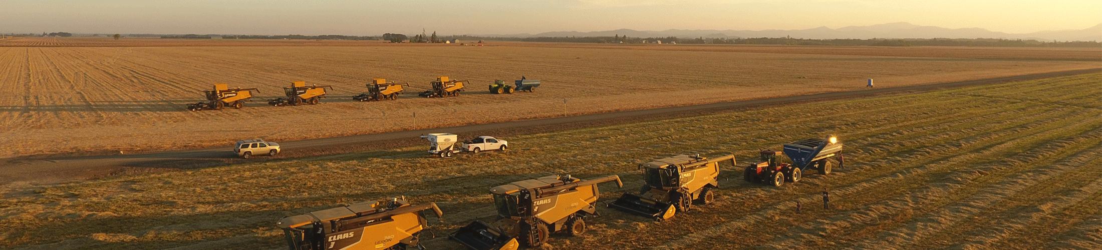 turfgrass producers farm